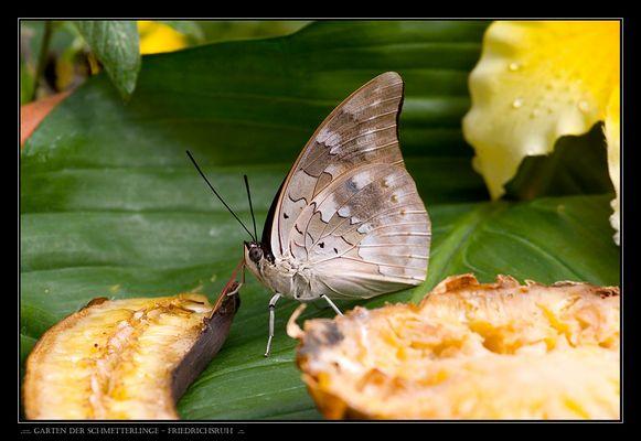 ..:::. Garten der Schmetterlinge - Friedrichsruh .::.
