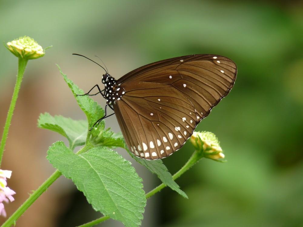 Garten der Schmetterlinge in Friedrichsruh bei Hamburg