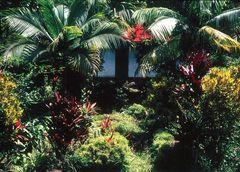 Garten Eden im Indischen Ozean