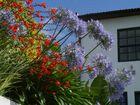 Garten im Minho Portugal , wie ein Blumenstrauss