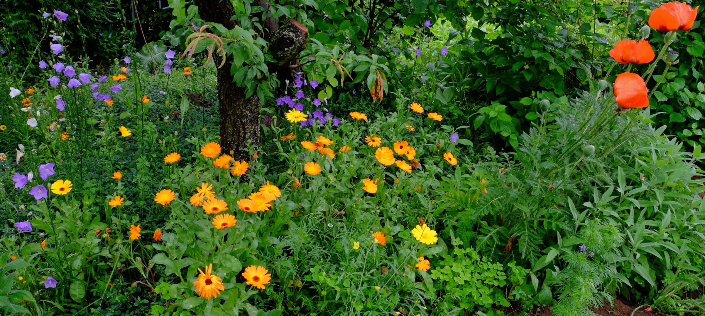 Garten-Impression 1