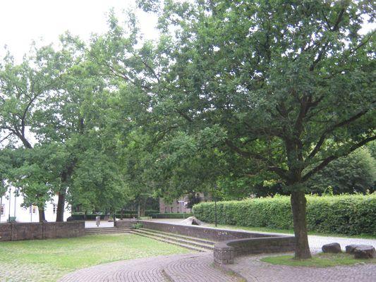 Garten in Altenberg/Bergisches Land