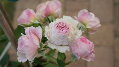 Garten Rosen