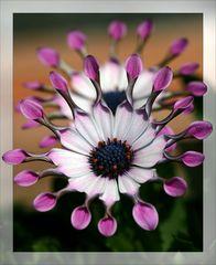 Garten-Schönheit