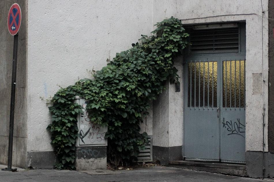Garten-Tipp: Okapi als Fassadenbegrünung