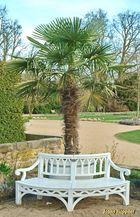 Gartenbank mit Palme