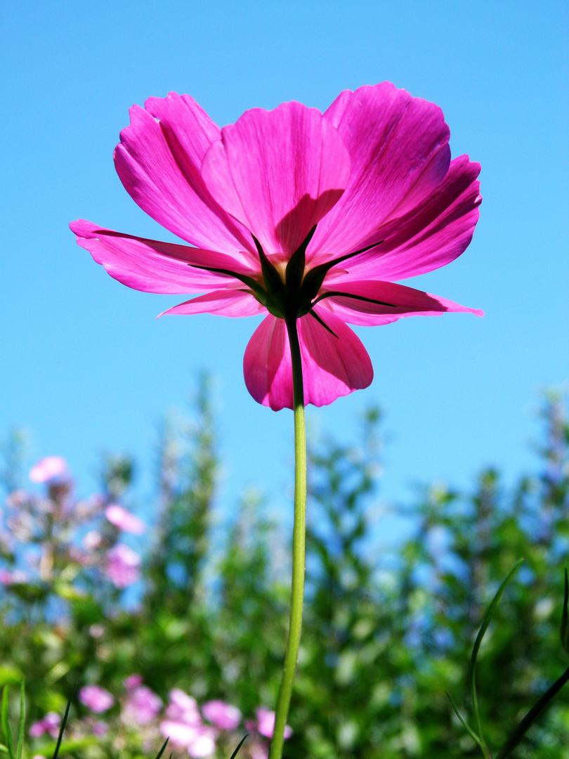 Gartenblümchen.