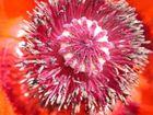 Gartenblüte