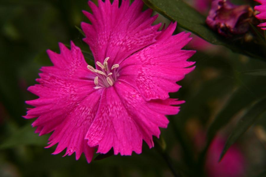 Gartenblume I