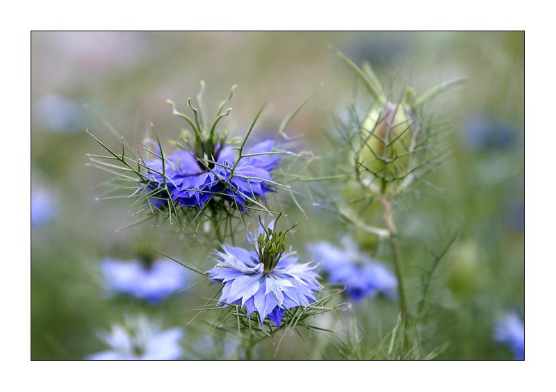 Gartenblumenknipserei I