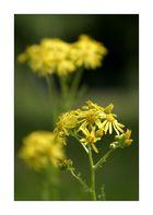 Gartenblumenknipserei III