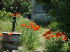 Gartenfreude