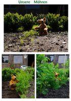 Gartengeschehnisse 11