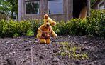 Gartengeschehnisse 4