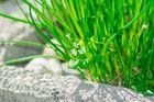 Gartengras 2