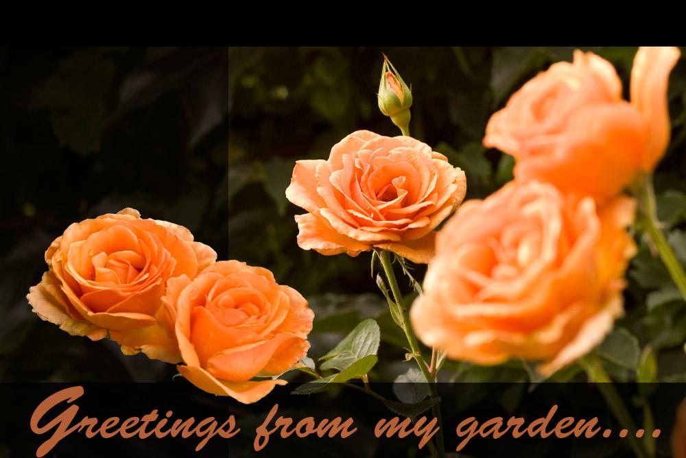 Gartengruss