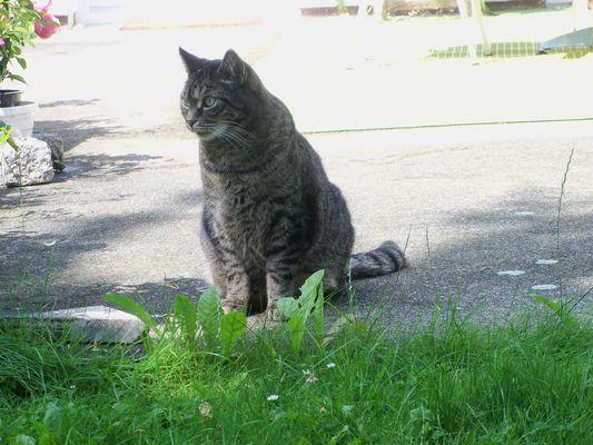Gartenkatze