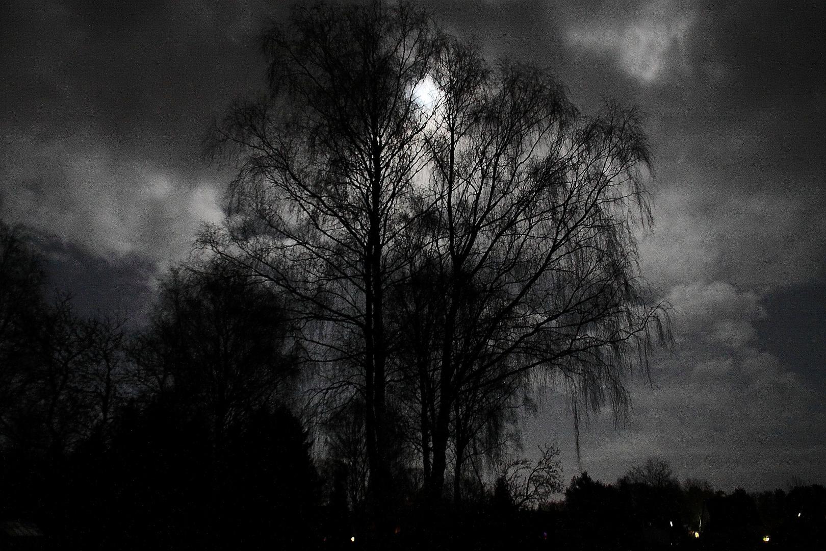Gartenlandschaft bei Mondschein
