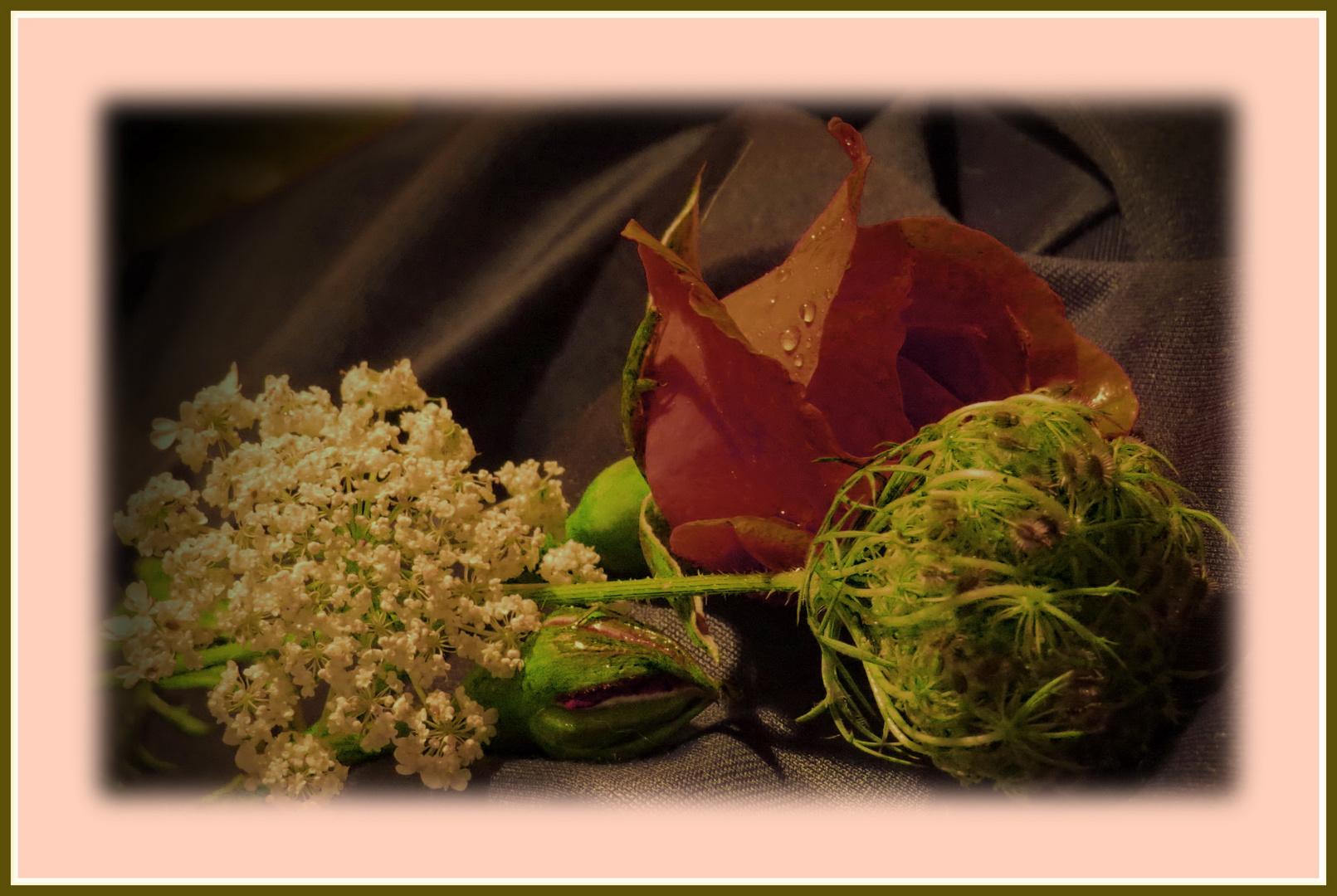 """Gartenrose mit 2 """"falschen Möhren"""" (alte+junge) zusammengelegt...."""