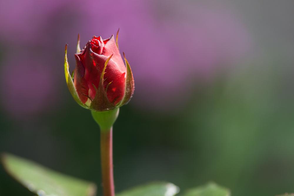 Gartenschätze (2)