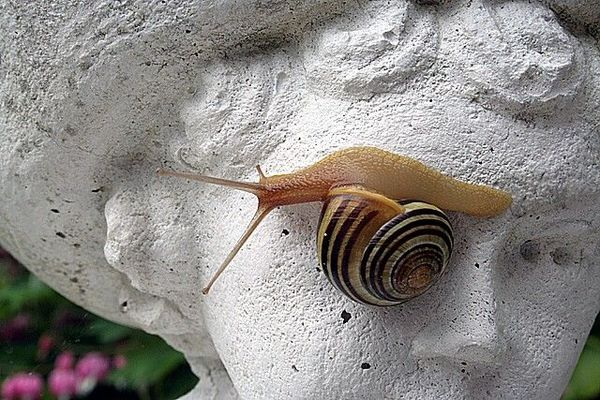 Gartenschnecke an Skulptur :o)