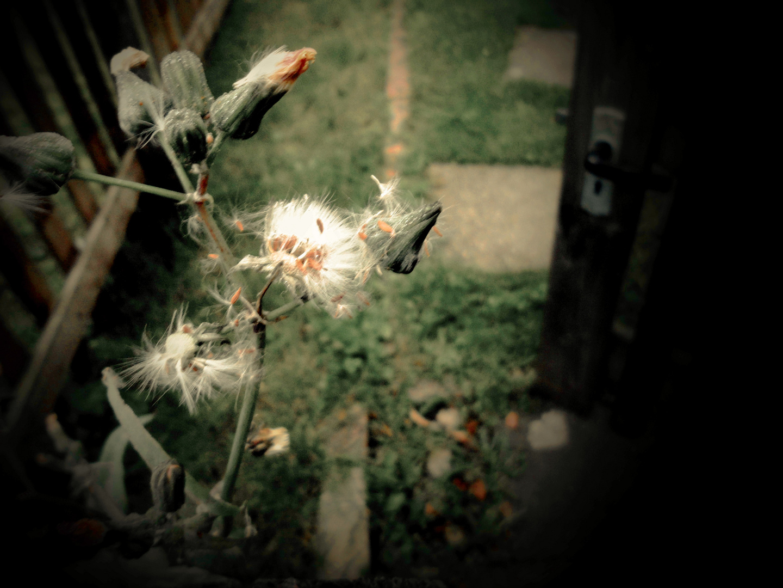 Gartentor im Herbst