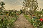 Gartenweg im Frühling