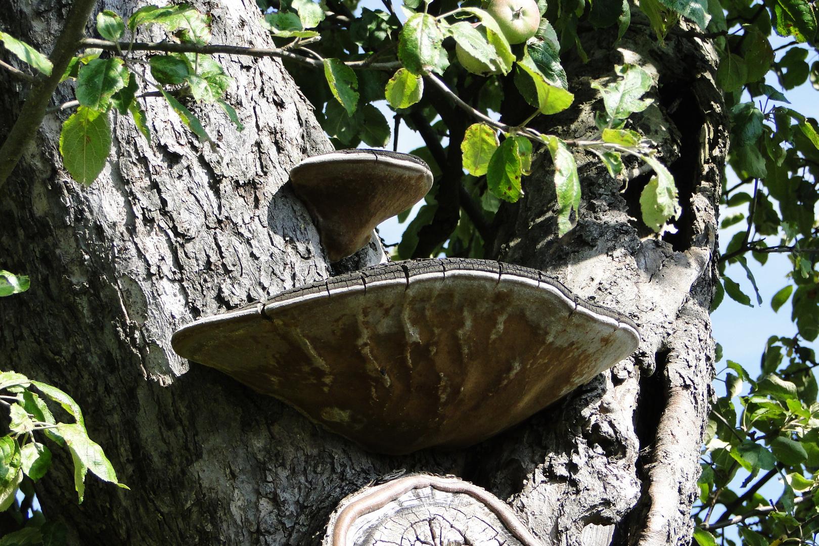 Gast am Baum