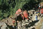 Gastransport in Nepal