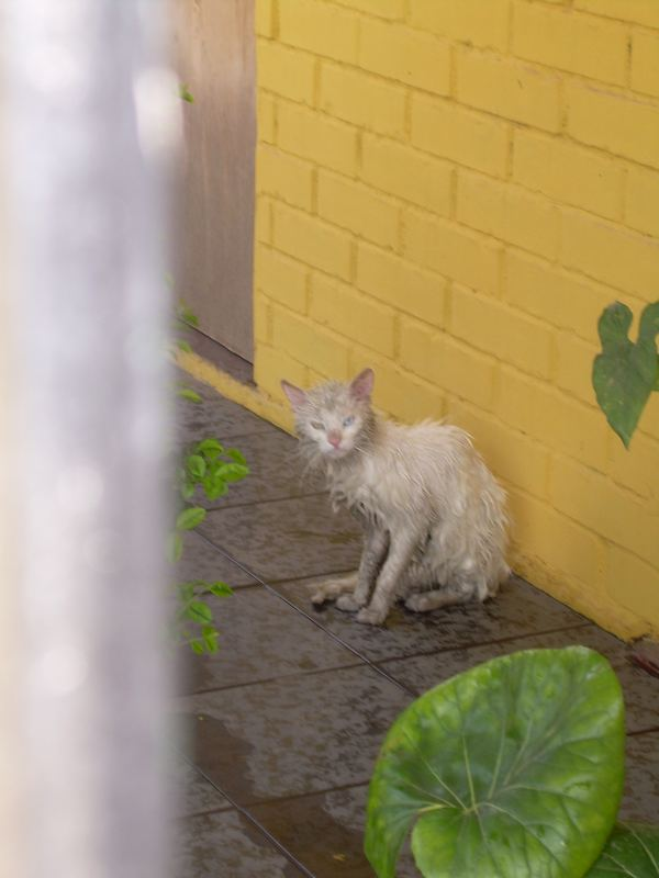 gatito cochino
