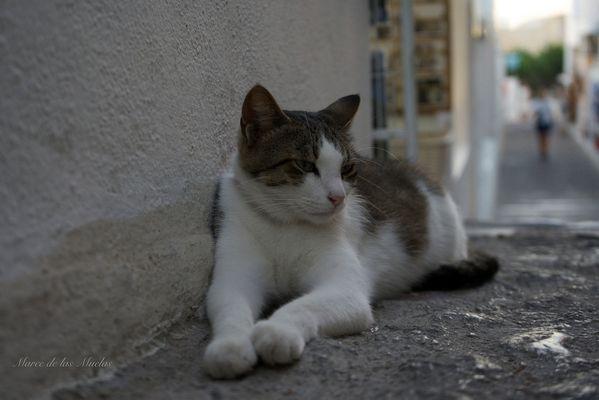 Gato acostado...