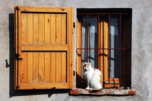 gato e finestra