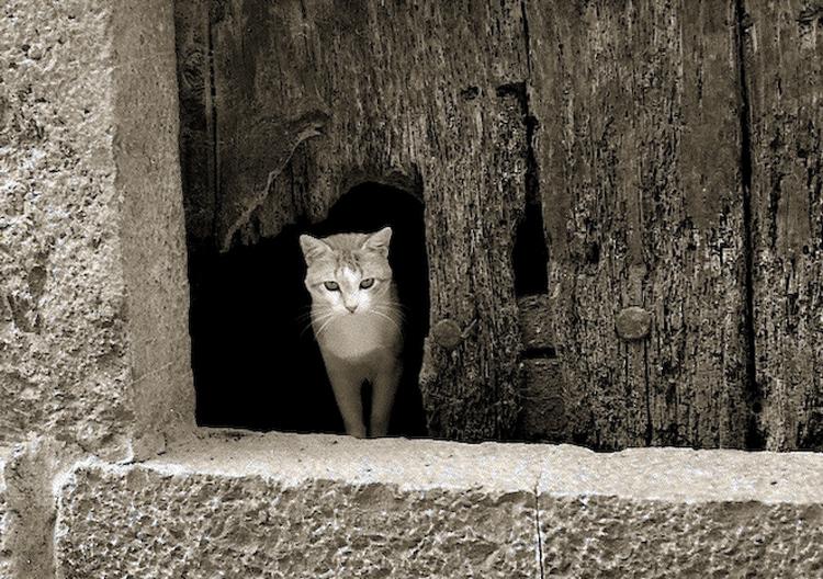 Gato en Ainsa