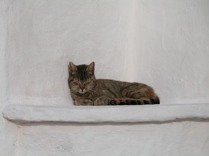 gato en Menorca