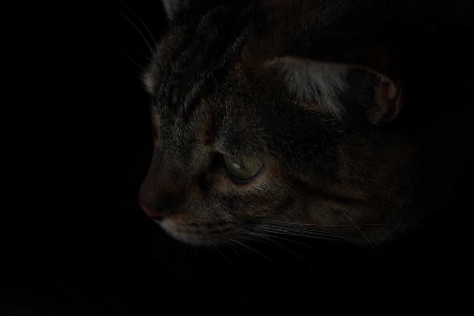 Gato hermético