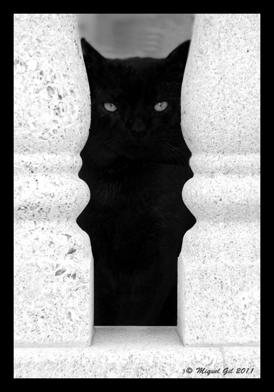 Gato jónico