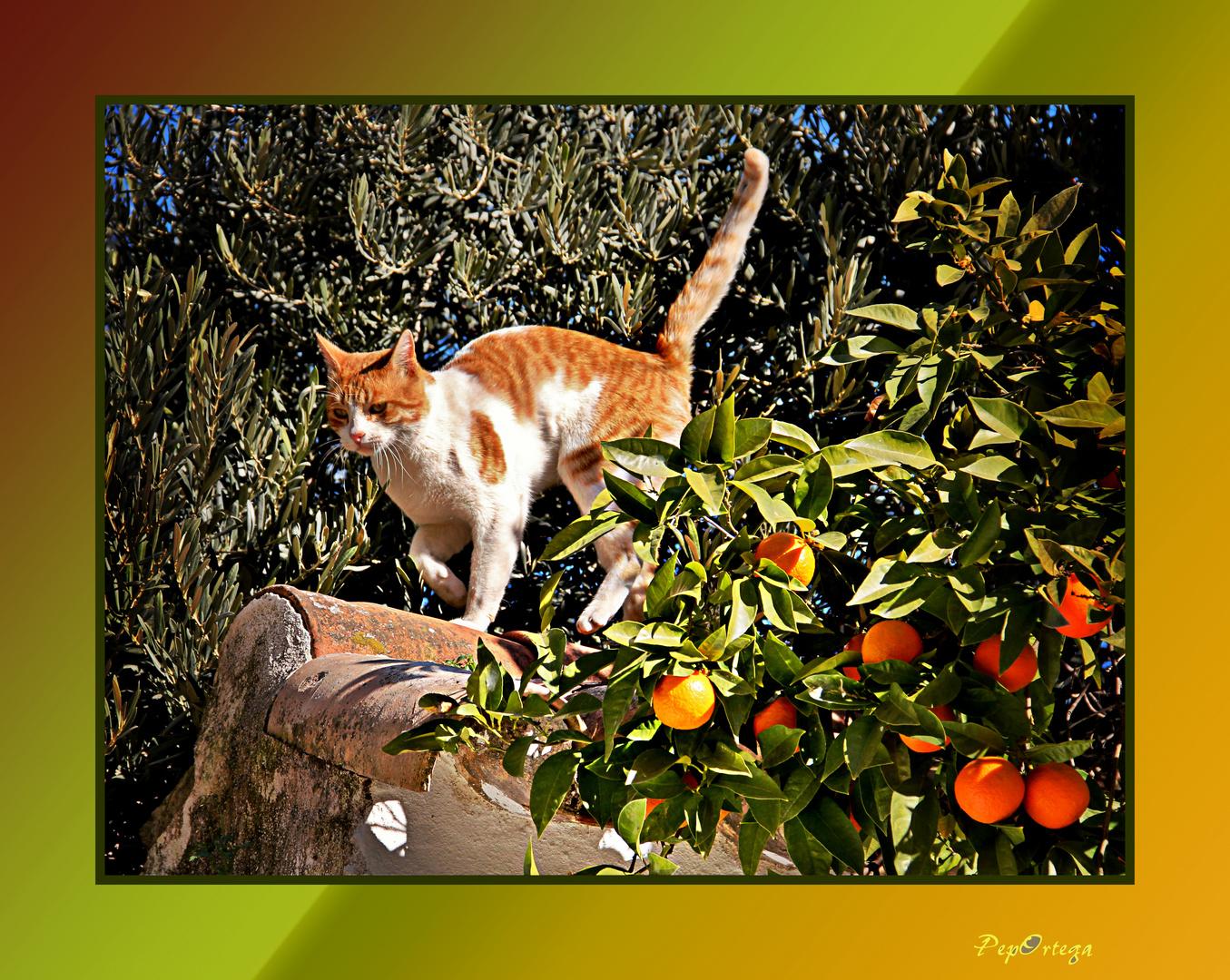 Gato sobre el tejado