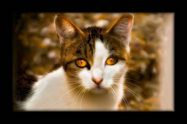 Gato2 ( A Alfonso Diaz)