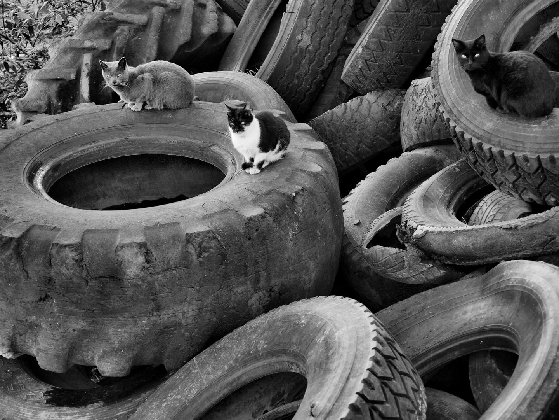 Gatos neumaticos