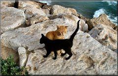 Gatti di mare che vanno a pescare.