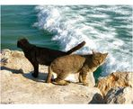 Gatti di mare....insieme.