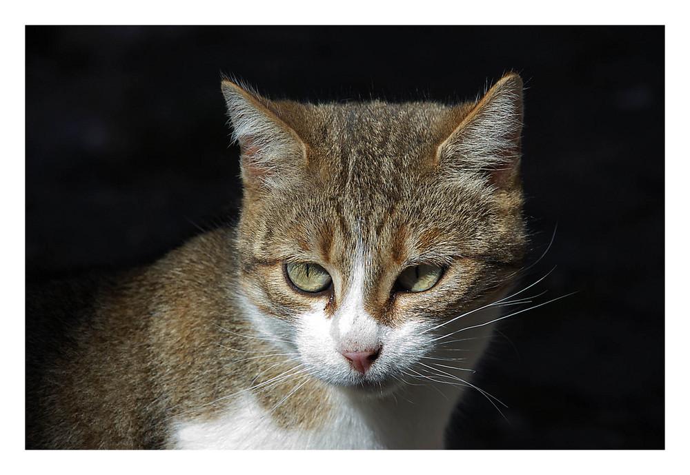 Gatti di Nusco