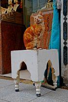 Gatti d'oriente