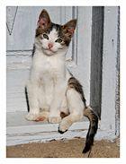 gattino vanitoso