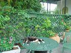 gatto a Key West, Hemingway house