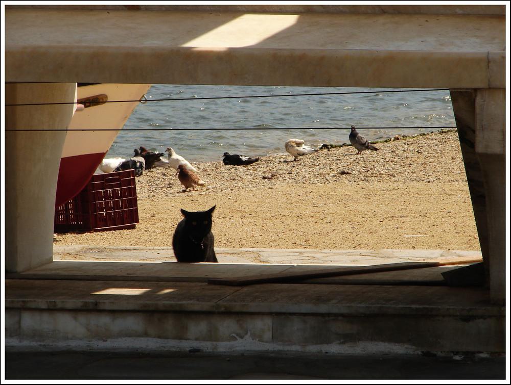 Gatto a Mykonos