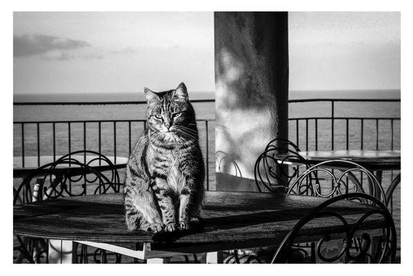 Gatto amalfitano