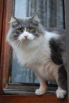 gatto del condominio