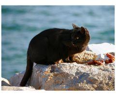 Gatto di Mare...che non va a pescare!!!