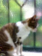 gatto dietro il vetro